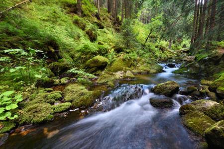 Swift mountain creek in a deep green valley