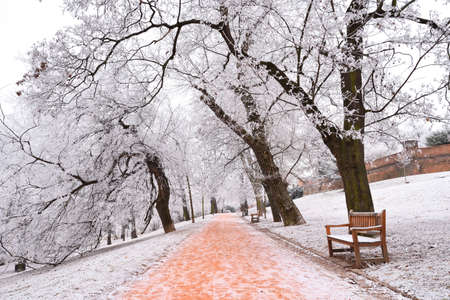 Rime covered trees in a city park with benches Stock Photo