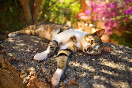 Bellissimo gatto del villaggio che riposa all'ombra in una calda giornata estiva