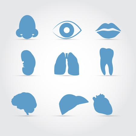 Medical Organs Icon Set  Blue  Eps10 Stock Vector - 17995829