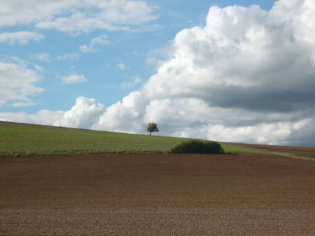 Small Tree on Horizon, field in front