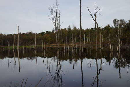 Dead trees are reflected in the water of a lake