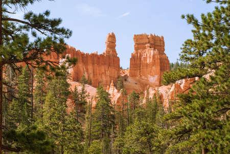 barren: Orange rocks Bryce Canyon through the pine branches. Utah, USA