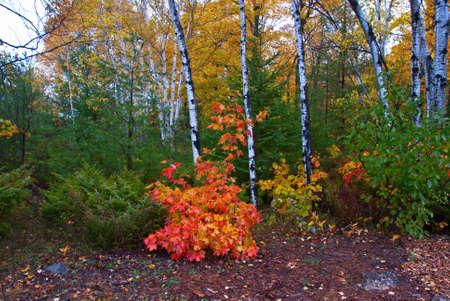 Rain in the colorful autumn forest on Washington Island, Wisconsin Stock Photo