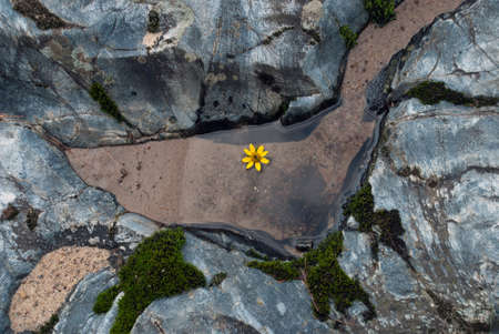 The flower in the water among the stones, Eau Claire River, Wisconsin, USA