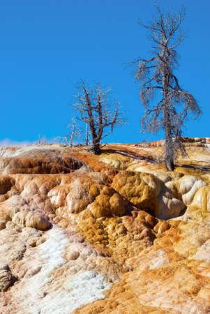 arboles secos: Los colores brillantes de la gama de colores de primavera terraza con árboles muertos en su parte superior, Mammoth Hot Springs