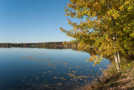 Fallen leaves on the surface of the lake, Waushara County, Wisconsin Stock Photo
