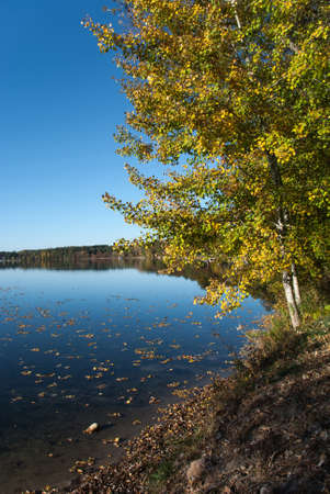 fallen tree: Trees in autumn attire on the lakeshore, Waushara County, Wisconsin Stock Photo