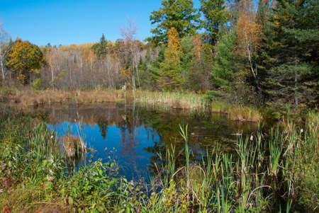 A small forest lake in autumn, Marinette county, Wisconsin