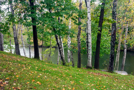 Birches and oaks on the shore of the forest  lake in the early autumn,  Monroe County, Wisconsin, USA