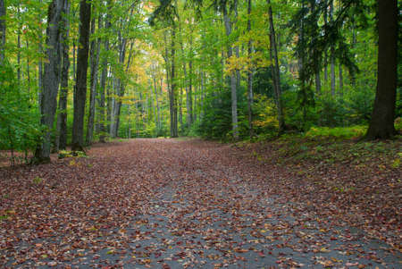 petes: Autumn alley in the Petes Lake Campground, Hiawatha National Forest, Michigan, USA Stock Photo