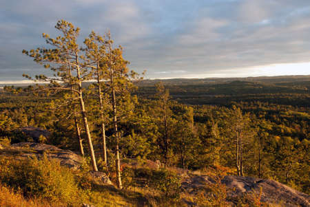 The forest around the Sugarloaf Mountain is brightly lit by the setting sun, Marquette County, Michigan, USA