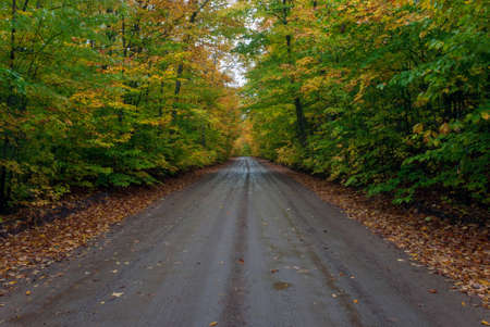 Wet from the rain the road running through the autumn forest, 510 road, Marquette County, Michigan, USA