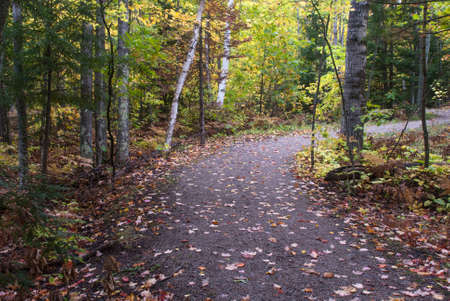 Footpath winding between autumn trees, Thomas Rock, Marquette County, Michigan, USA Stock Photo