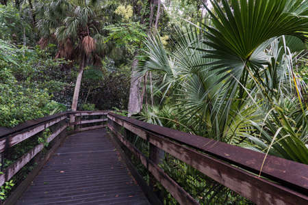 A boardwalk leading to the Rainbow River, Rainbow Springs State Park, Florida, USA