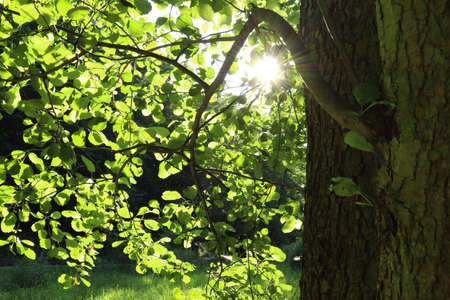 The sun shines through the leaves.