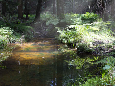 Fern leaves are reflected on the water surface of the stream.