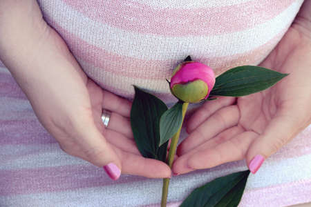 natural childbirth: Pregnant womans belly with a rose