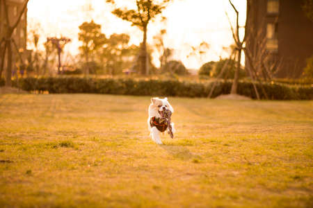 Dog running and playing in the garden, shanghai.