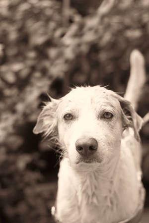 take a bath: cute dirty dog take a bath ,low key Stock Photo
