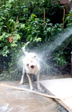 take a bath: cute dirty dog take a bath