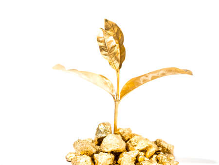 xwhite: Golden tree grows from the gold mountain as a symbol of the growth of business, investment concept