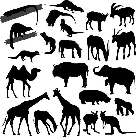 mangosta: Siluetas de diferentes animales  Vectores