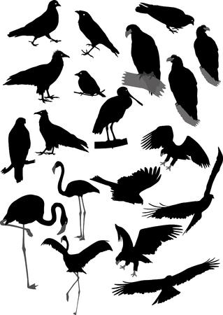 goshawk: Lot of vector silhouettes of birds