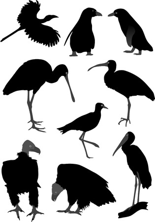 pinguin: Silhouettes of different birds