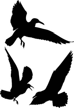 Some silhouettes of seagulls flying Stock Vector - 2757295