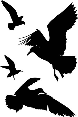 Some silhouettes of seagulls flying Stock Vector - 2757294