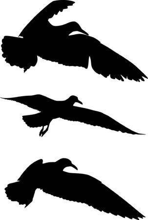 goshawk: Some silhouettes of seagulls flying