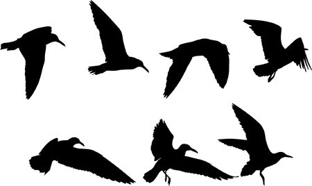 Some silhouettes of seagulls flying Vector