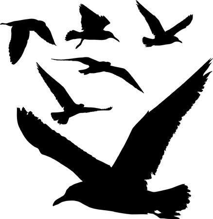 Algunas siluetas de volar de las gaviotas Ilustración de vector