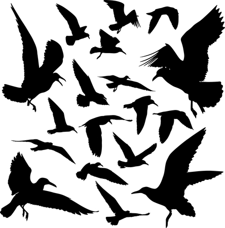 flock of birds: Some silhouettes of seagulls flying