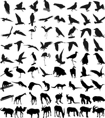 loutre: Beaucoup de silhouettes de diff�rents animaux et oiseaux