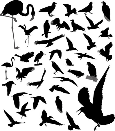 Lot of vector silhouettes of birds Vector