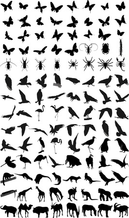 feeler: Many silhouettes of different animals and insects