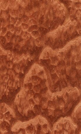 Vavona burl texture (high-detailed wood texture series) photo