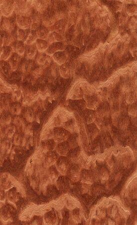 burl wood: Vavona burl texture (high-detailed wood texture series) Stock Photo