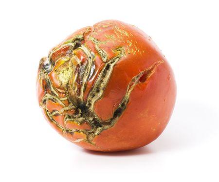 Bad Tomaten mit Narben, isoliert auf weiss Standard-Bild - 5573749