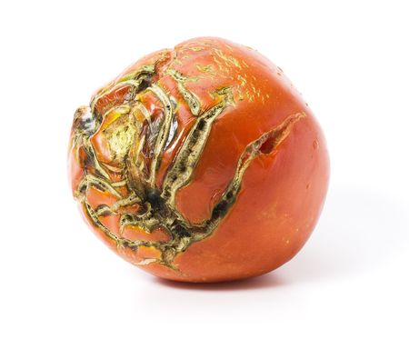 Bad tomato with scars isolated on white
