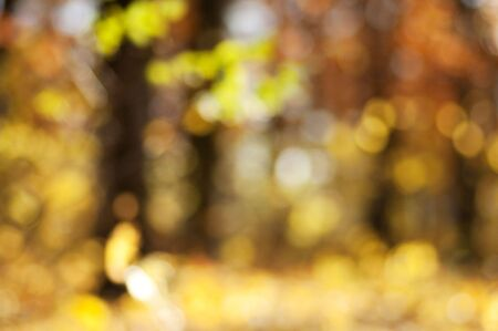 Blurred background of autumn forest with nice bokeh. Perfect as a background for studio portrait. Stock Photo - 5834602