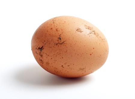 Ei verschmutzte mit Vogel Dung als Ursache der Salmonellose Standard-Bild - 9410181