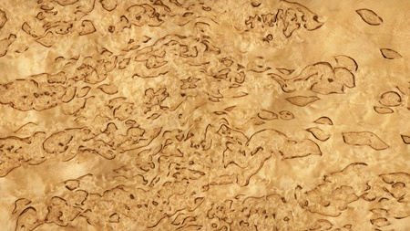 Texture of karelian birch  high-detailed wood texture series