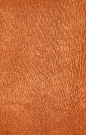 Texture of lacewood  high-detailed wood texture series
