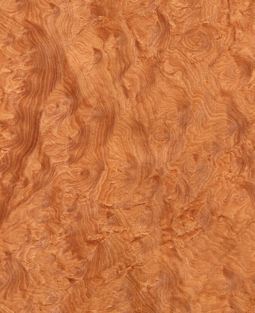 Texture of madrone s root  high-detailed wood texture series  Standard-Bild