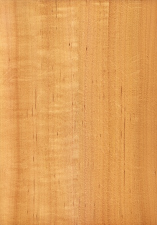 Texture of alder  high-detailed wood texture series
