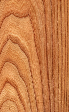 Texture of elm  high-detailed wood texture series
