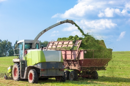 Silage Season - Harvester cutting field and loading crushing grass into a tractor trailer